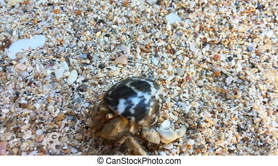 Hermit crab with shell crawling by beach - Closeup view of ...