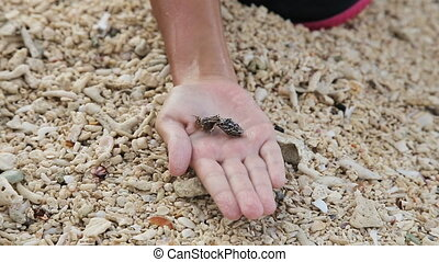 Hermit crabs on a child's hand - girl holds her hand on...