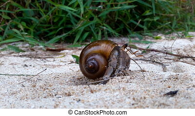 Hermit crawls along the sand. - Hermit crab close-up