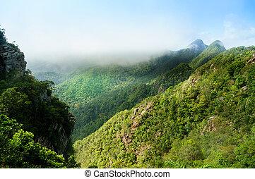 hermoso, árbol, cubierto, montañas, en, langkawi, con, niebla, rodante