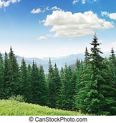 hermoso, árboles de pino