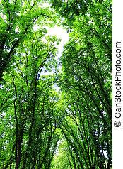 hermoso, árboles verdes, en el parque