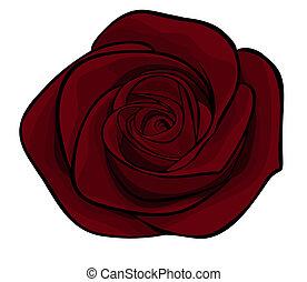 hermoso, aislado, granate, rosas, plano de fondo, blanco, solamente
