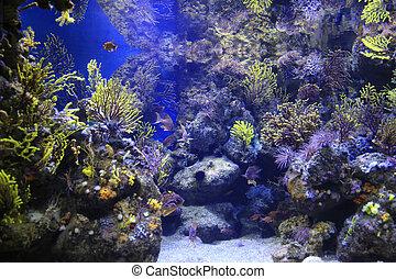 hermoso, animales marinos, colorido