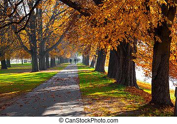 hermoso, arriba, árboles, otoño, calzada peatonal, alto, ...