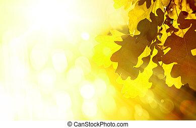 hermoso, arte, hojas, roble, otoño, Plano de fondo