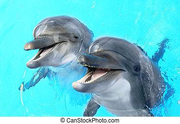 hermoso, azul, claro, delfín, soleado, agua, contento, sonriente, día, piscina, natación