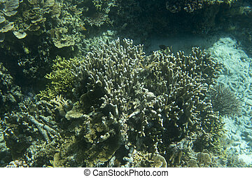 hermoso, barrera coralina