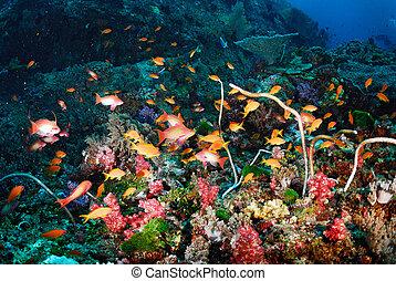 hermoso, barrera coralina, y, colorido, pez
