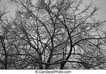 hermoso, branches., árboles., árbol, textura, descubierto, bosque, plano de fondo, crepúsculo, teja