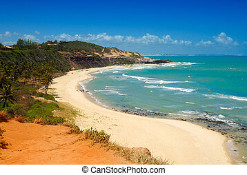 hermoso, brasil, árboles, praia, palma, amor, playa