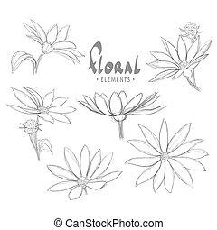 hermoso, brote flor, flores