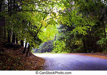 hermoso, brumoso, otoño, montañas., bosque