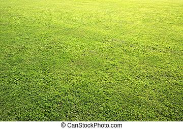 hermoso, césped verde, en, verano, park.