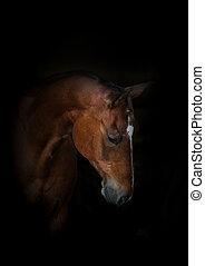 hermoso, caballo, retrato, en, negro