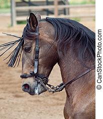 hermoso, caballo, spai, movement., andalucía, español, ...