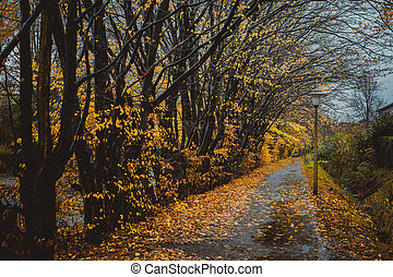 hermoso, callejón, en, un, parque, con, lanterns., hoja, otoño, otoño, natural, plano de fondo