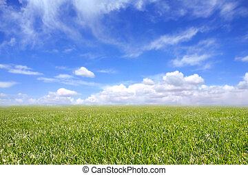 hermoso, campo, de, hierba verde, y azul, cielo nublado