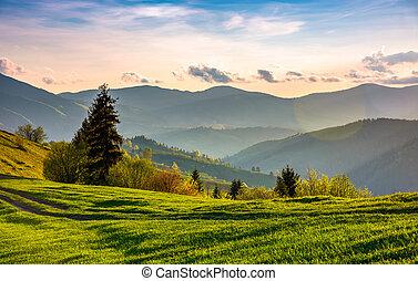 hermoso, campo, en, primavera