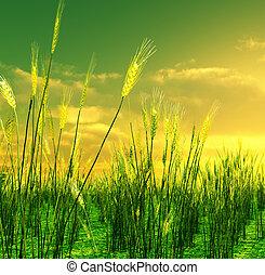 hermoso, campo, encima, trigo, ocaso