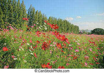hermoso, campo, florecido, paisaje