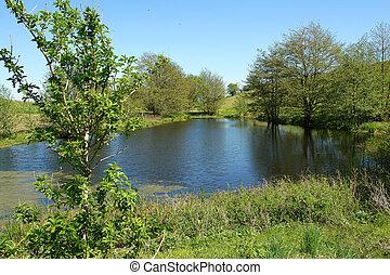 hermoso, campo, lago, primavera, verano, paisaje