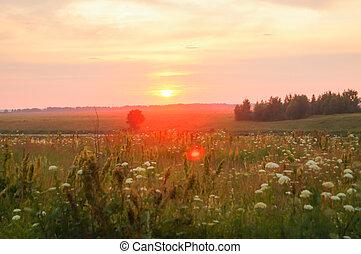 hermoso, campo, verde, ocaso