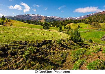 hermoso, carpathian, campo, en, primavera