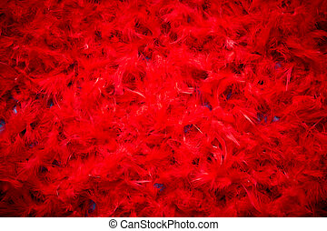 hermoso, cima, feathers., plano de fondo, rojo, vista