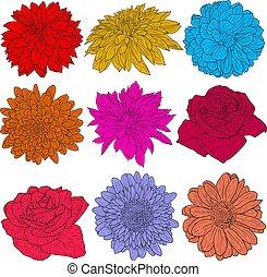hermoso, color, bosquejo, flor, blanco, plano de fondo