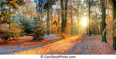 hermoso, coloreado, árboles, en, otoño, paisaje, fotografía