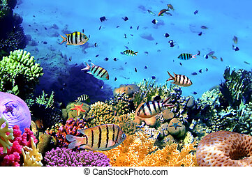 hermoso, corales, pez