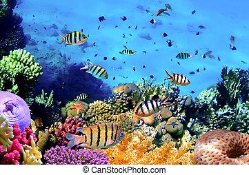 hermoso, corales, y, pez