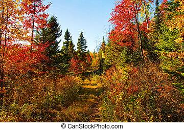 hermoso, día de otoño, en, el, bosque