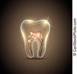 hermoso, dorado, ilustración, diente, transparente, raíces