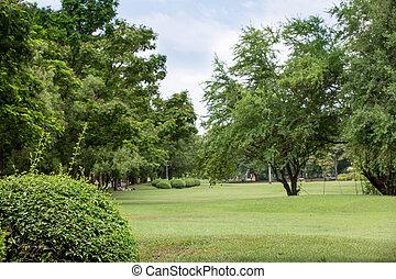 hermoso, en, parque público, con, hierba verde, campo, y, verde, fresco, árbol, planta, perspectiva