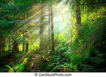 hermoso, escena, brumoso, viejo, bosque, con, rayos sol