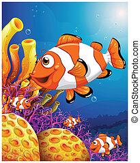 hermoso, escollos, escuela, pez, coral