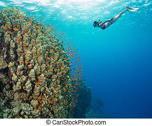 hermoso, explorar, mujer, submarino, océano, sealife,...