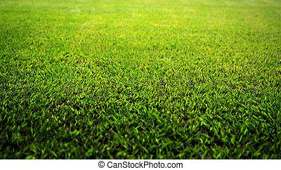 hermoso, exuberante, hierba verde, césped, en, un, parque, en, un, brillante, verano, o, primavera, día, con, encendido, hojas