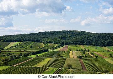 hermoso, filas, de, viticultura