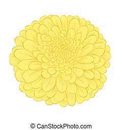hermoso, flor, aislado, fondo amarillo, blanco