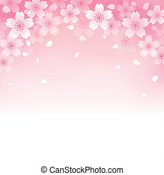 hermoso, flor de cerezo, plano de fondo