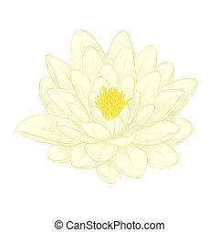 hermoso, flor de loto, pintado, en, gráfico, estilo, aislado, blanco, plano de fondo