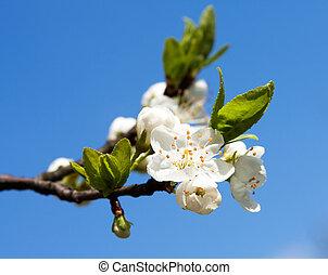 hermoso, flor de primavera