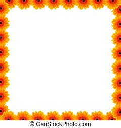 hermoso, flor, frontera, con, libre, espacio