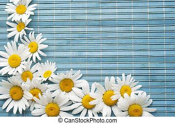 hermoso, flor, frontera
