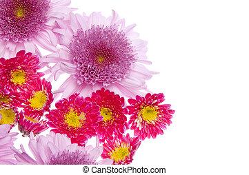 hermoso, flor, frontera, imagen