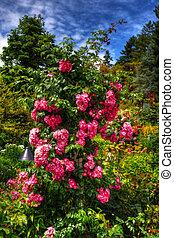 hermoso, flor, hdr, jardín