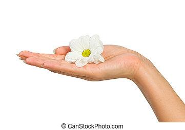 hermoso, flor, mano femenina